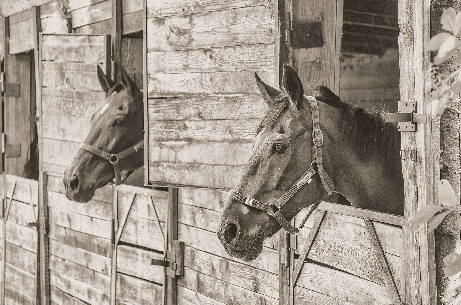 Understanding the Great Horse Manure Crisis of 1894