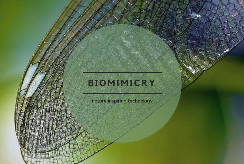 biomimicry, nature inspiring technology, biomimetic, technology