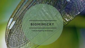 Biomimicry: When Nature Inspires Technology