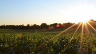 Blast the Weeds Away: One Man's Approach to Organic Farming