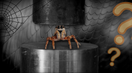The Fascinating Relationship Between Hydraulic Systems and Spiders