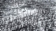 The Hidden Oil Rigs of L.A.